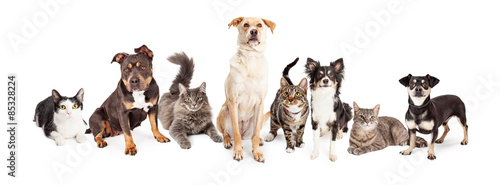 Large Group of Cats and Dogs Together © adogslifephoto