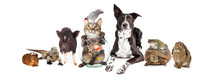 Group Of Domestic Pets Sitting Together