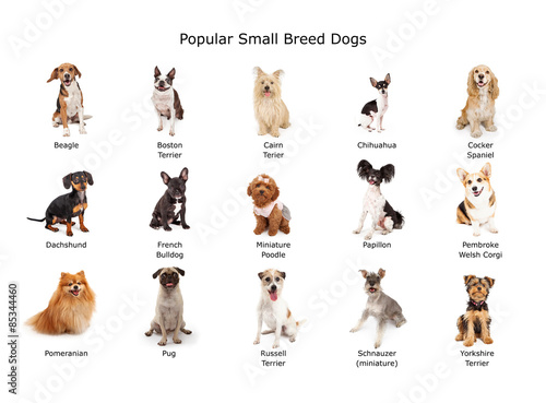 Collection of Popular Small Breed Dogs Canvas Print
