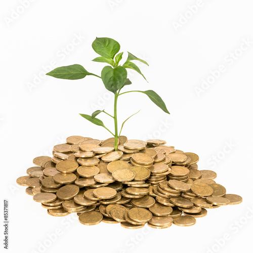 Fotografía  Financial Growth