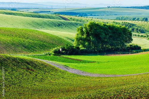 Spoed Foto op Canvas Nieuw Zeeland Moravian rolling landscape with trees