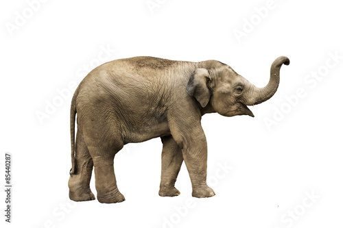 Fotobehang Olifant Asia elephant on isolated white background
