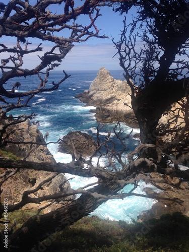 Fotografia, Obraz  Point Lobos