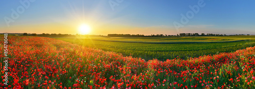 Panorama of poppy field at sunrise