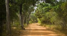 Straight Dirt Road In A Tropical Jungle, Sri Lanka