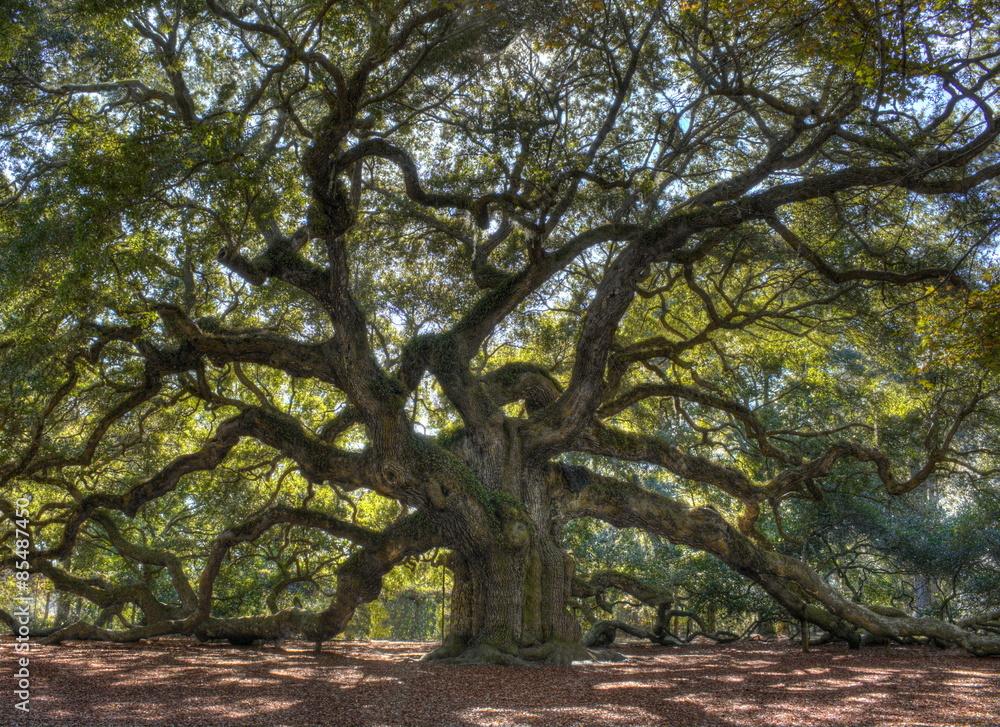 Majestic live oak angle tree