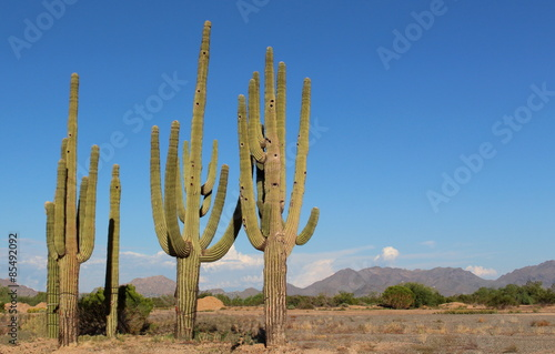 Saguaro cactus in the desert with mountains