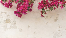 Mauer Im Shabby Style Mit Bougainvillea Pink