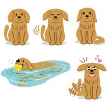 ゴールデン レトリバー 犬 表情 Set Of Adorable Golden Retriever Expression