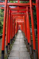 Fototapeta Japoński Torii Gates At Nezu Shrine, Tokyo, Japan