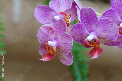 Orchidées dans la serre du Jardin du Palazzo Parisio – kaufen Sie ...