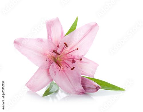 Pink lily © karandaev