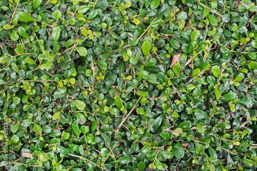 zielen-lisci-scienny-tlo-proces-z-filtrem