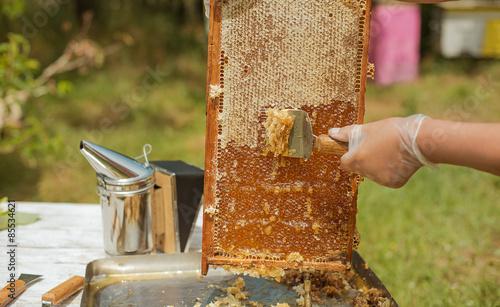 frame honey Canvas Print