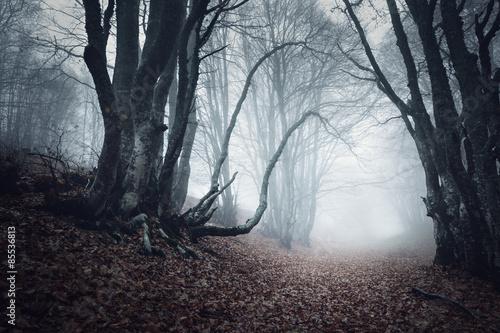 Aluminium Prints Dark grey Trail through a mysterious dark old forest in fog. Autumn