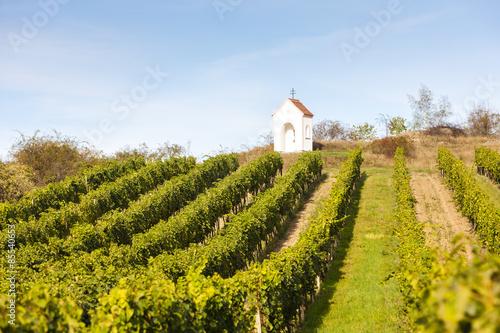 Photo  God's torture near Hnanice with vineyard, Southern Moravia, Cze