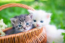 Little Kitten In A Basket On The Grass,