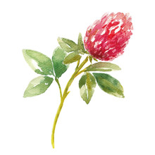 Red Watercolor Clover Field