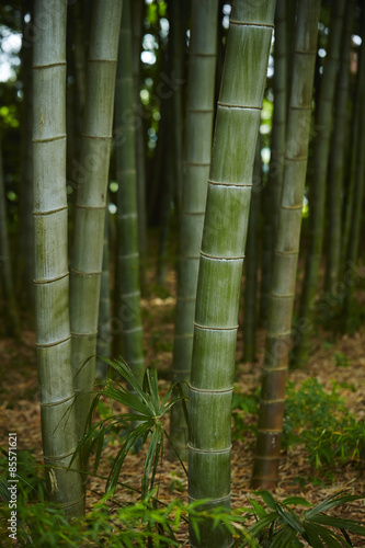 Deurstickers Berkbosje Bamboo