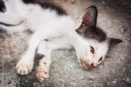 Fotografia  Little sick cat dying sleep on gray floor