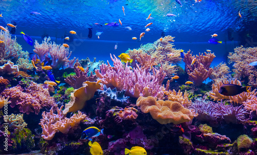 Photo Stands Coral reefs tropical fish on a coral reef