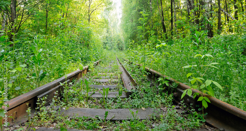 Abandoned railroad in the woods