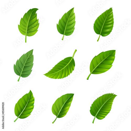 Obraz Green leaves decorative set - fototapety do salonu