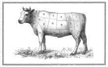 Old Beef Chart With Numbered ...