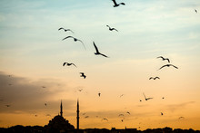 Mosque Silhouette Istanbul