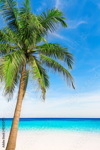 Poster Oceanië Palm tree in tropical perfect beach at Phuket.