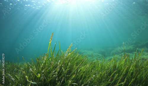 Underwater sea grass and blue ocean water Canvas Print