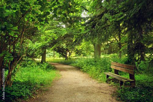 Plakat Ścieżka w parku