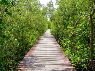 Fototapetastairway leading to the tropical mangrove in the sea shore
