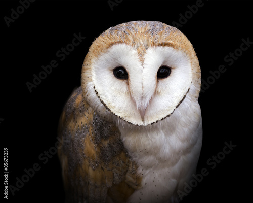 Keuken foto achterwand Uil closeup portrait of a barn owl on a black background