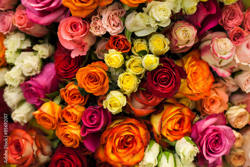 Ingelijste posters Roses beautiful bouquet of multicolored roses
