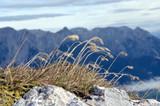 Trawa na górskim szczycie