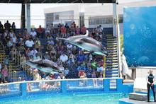 Miami Seaquarium 4k