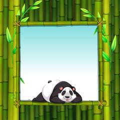 Fototapeta Panda Bamboo