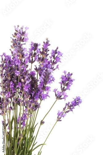 Spoed Fotobehang Lavendel Lavender, Lavender Coloured, Flower.