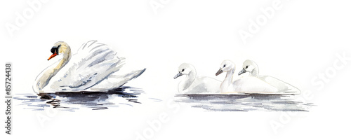 Fotografia Swan floats