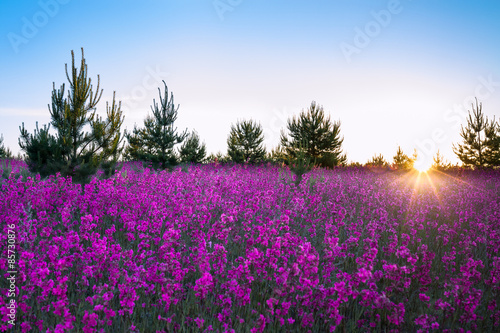 Foto op Plexiglas Panoramafoto s landscape with the blossoming meadow at sunrise
