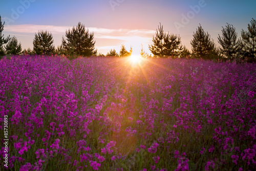 Foto op Plexiglas Panoramafoto s landscape with the blossoming meadow at sunrise.blur scene