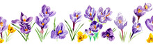 Seamless Border From Crocus Flowers. Watercolor Hand Drawn Illustration