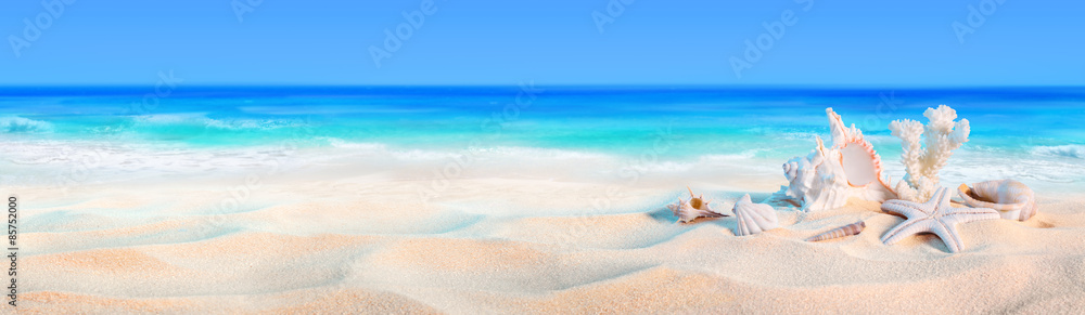 seashells on seashore - beach holiday background
