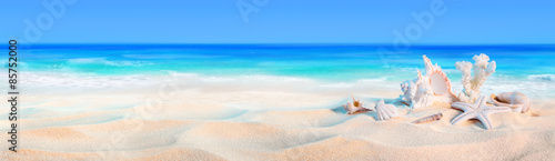 Fotobehang Strand seashells on seashore - beach holiday background
