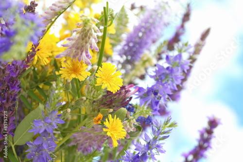 dzikie-kwiaty