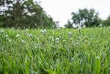 gardens grass
