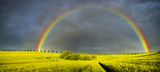 Fototapeta Tęcza - Spring colorful rainbow over the field after passing rainstorm