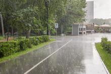 Summer Heavy Rain In The Park