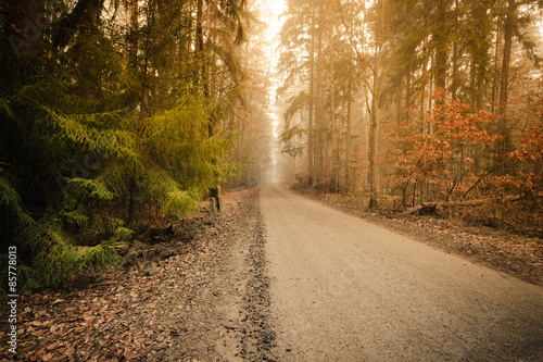 Tuinposter Weg in bos Pathway through the misty autumn forest